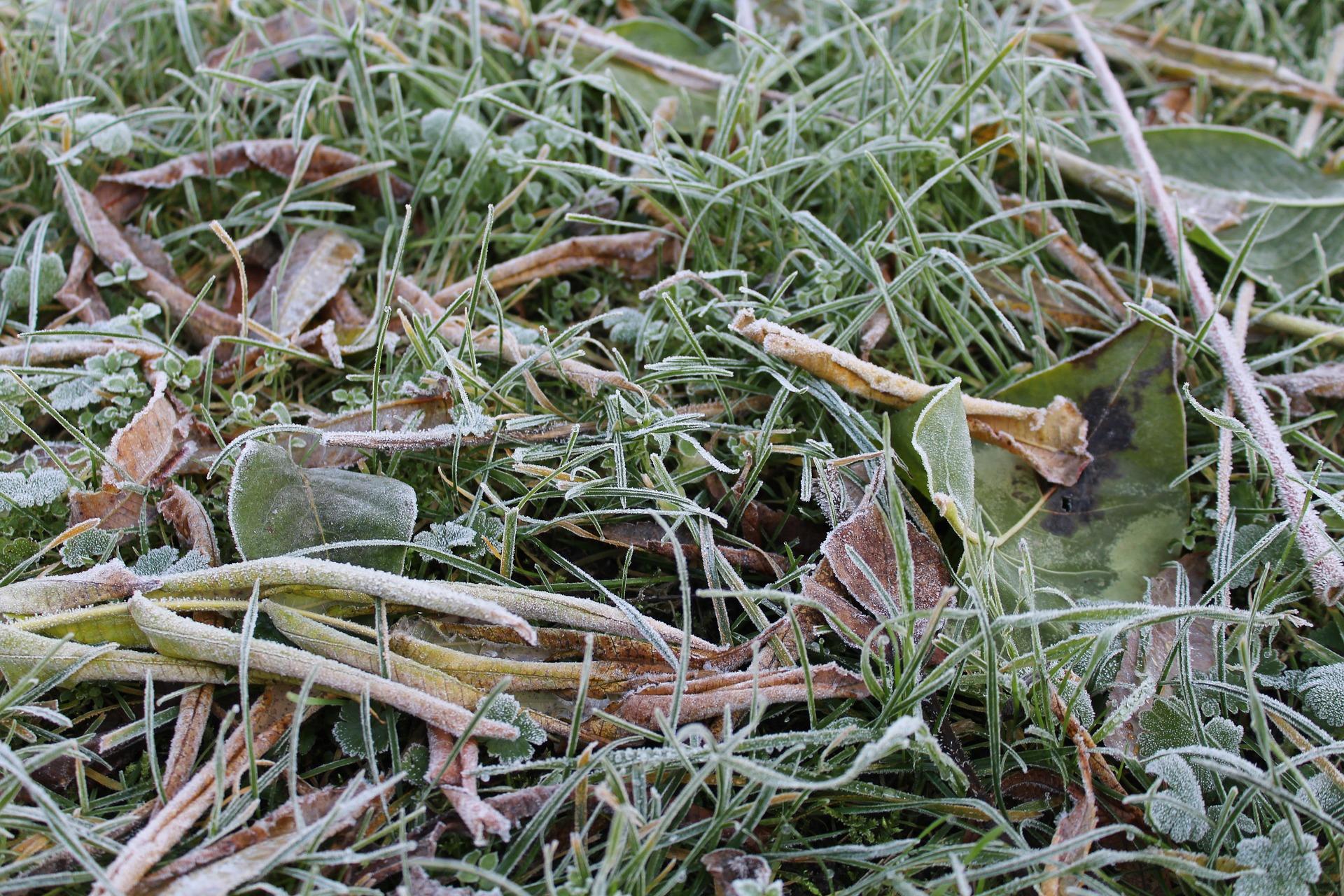 Nadejście pierwszych przymrozków to sygnał, że czas zacząć przygotowania do zimy