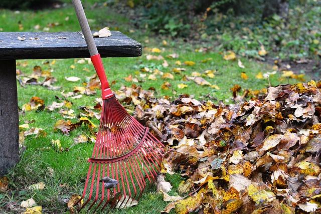 Grabienie liści w ogrodzie jesienią