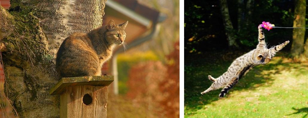 Kocie zabawy w ogrodzie