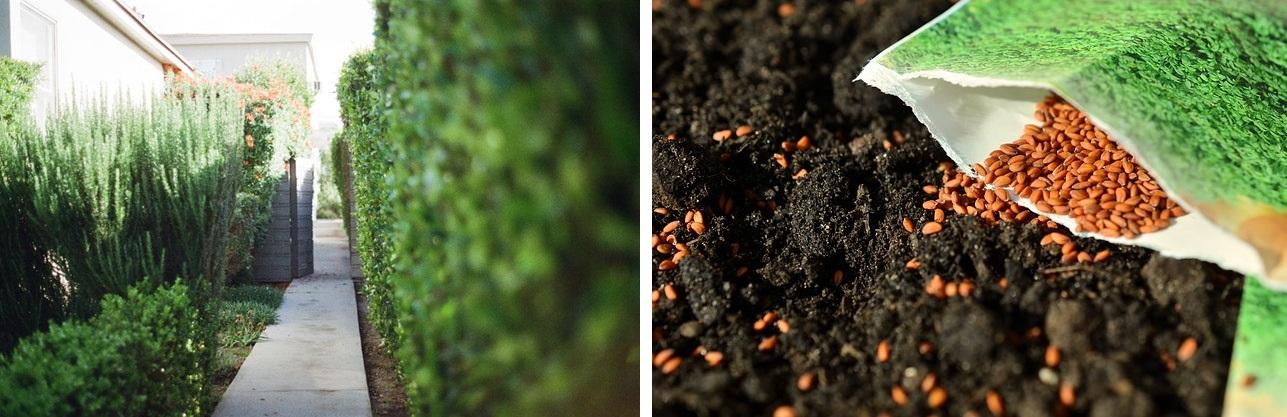 Ogrodowe rabaty, trawniki i propozycje na aranżacje małego ogródka