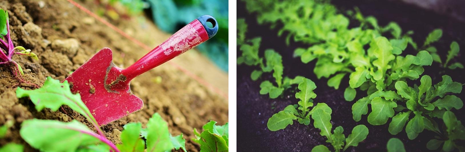 Stworzenie własnego warzywnika to nic trudnego - wykorzystaj drewnianą architekturę ogrodową
