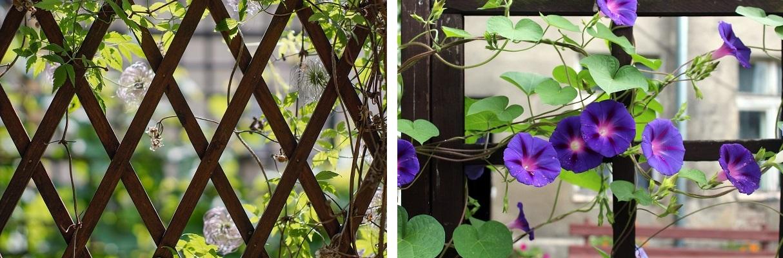 Pomysły na rośliny pnące w ogrodzie