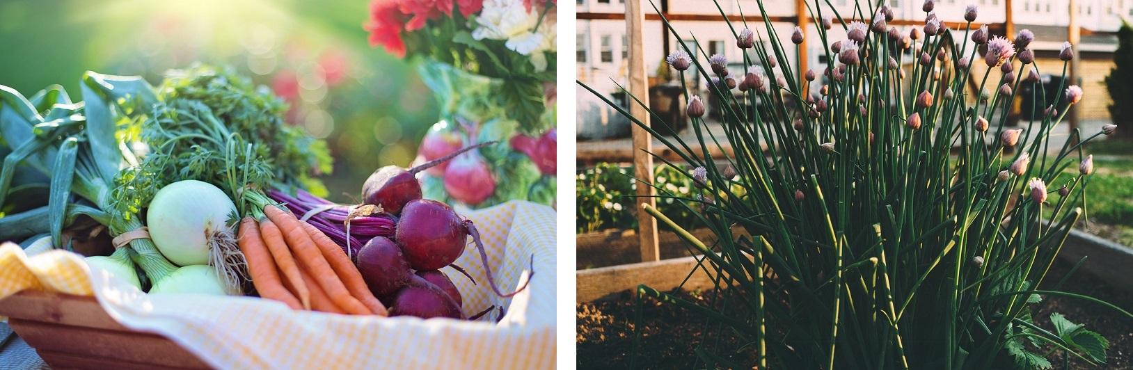 Podniesione rabaty i drewniane zielniki - najlepszy sposób na własną uprawę ogrodową