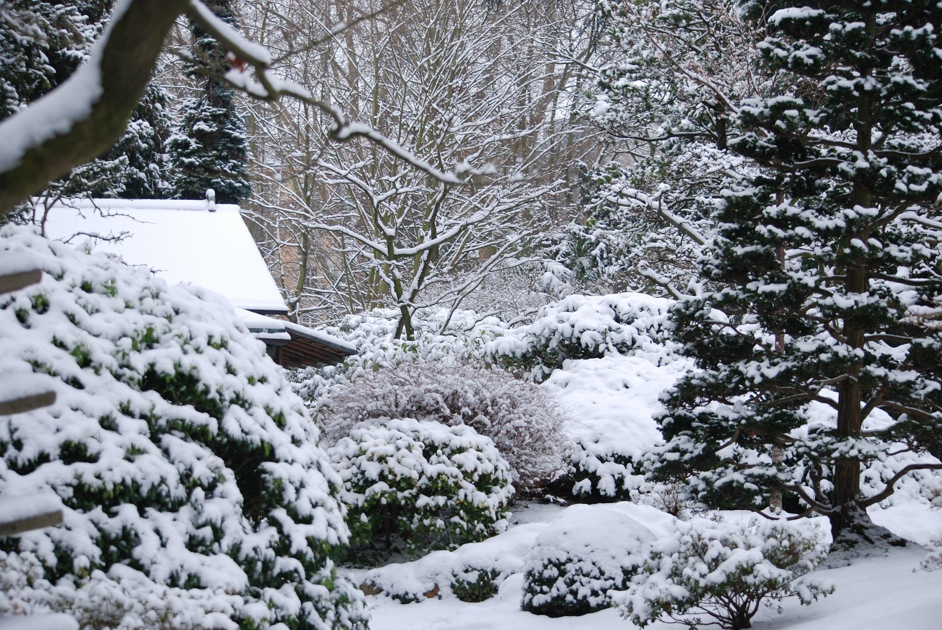 Pamiętajmy o regularnym strząsaniu nadmiaru śniegu z roślin.