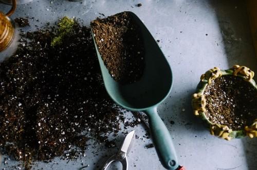 Jak przygotować grunt pod trawnik, rabatę i warzywnik?