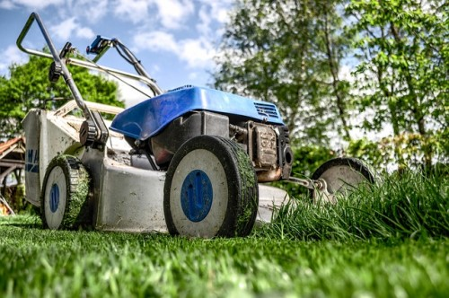 Jak założyć i pielęgnować trawnik?