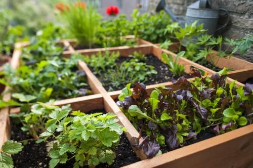 Jak założyć warzywnik?