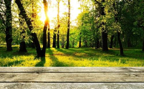 Jak zrobić taras drewniany? Praktyczne porady dotyczące budowy tarasu