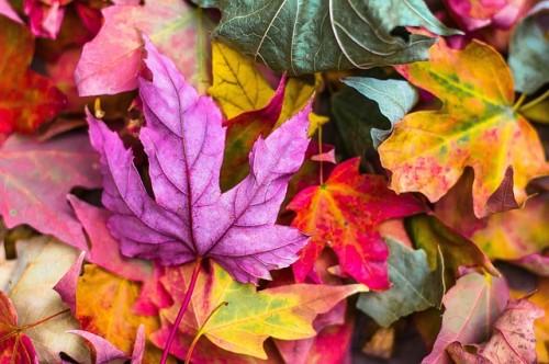 Jesień w ogrodzie: 10 rzeczy, które musisz zrobić na koniec sezonu działkowego.