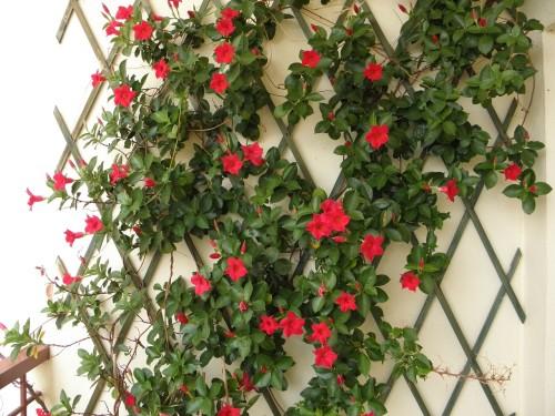 Kratki ogrodowe - jak można je wykorzystać?