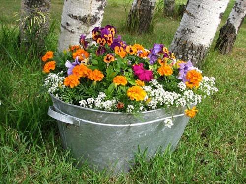 Letnie kwiaty – wyjątkowa ozdoba ogrodu