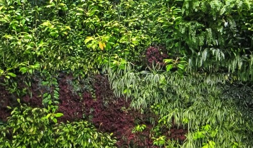 Ogrody wertykalne w mieszkaniu, na tarasie i w ogrodzie
