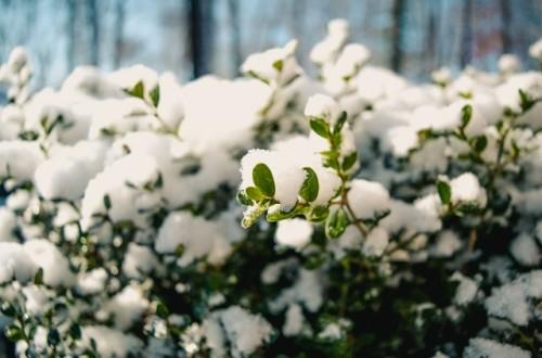 Szkodliwe działanie śniegu i mrozu w ogrodzie