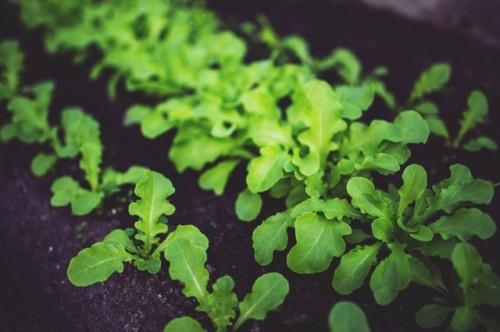 Warzywnik w ogrodzie - zakładanie rozsady i tworzenie grządek podwyższonych