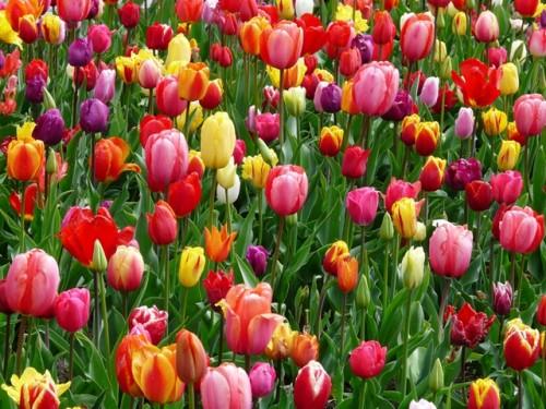 Wiosenne kwiaty w ogrodzie